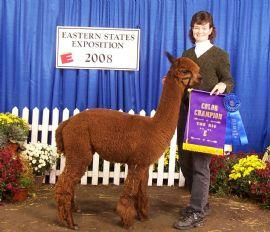 Alpaca herdsire from Stone Bridge Farm, Griswold, CT